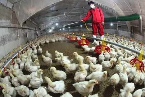 What Do We Know About the New Bird Flu?   Virology News   Scoop.it