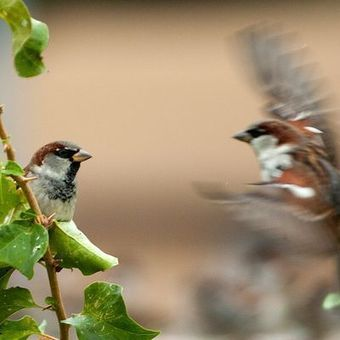 Bird group calls for halt to widely applied insecticide | Food issues | Scoop.it