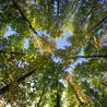 Bois, forêt, construction, bois énergie, ameublement et plus