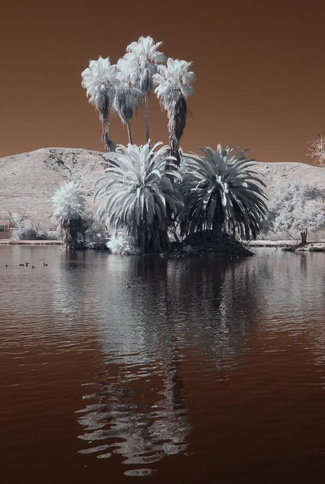 Amazing Examples of Infrared Photography | Everything Photographic | Scoop.it