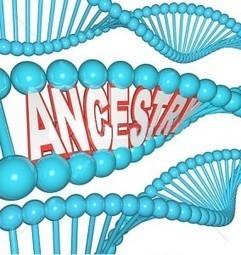 Le nuove frontiere della genealogia genetica. Il DNA degli autosomi | Généal'italie | Scoop.it