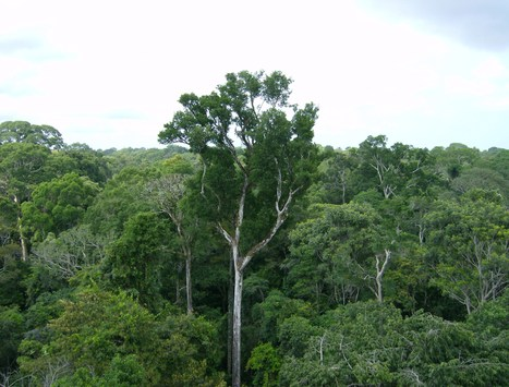 NASA Study Finds That Amazon Rainforest Inhales More Carbon than It Emits   Amazing Science   Scoop.it