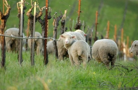 The Best Organic Wines For Earth Day   Vitabella Wine Daily Gossip   Scoop.it