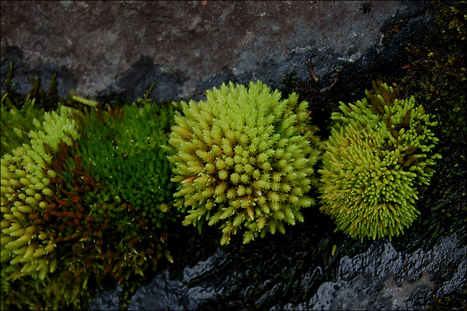 Moss can power a radio, and could eventually charge your phone | Lauri's Environment Scope | Scoop.it