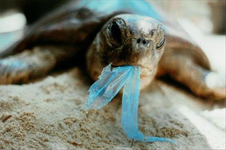 Campaign against Plastic Pollution « Wyatt Roy – Federal Member ... | scubadiving | Scoop.it
