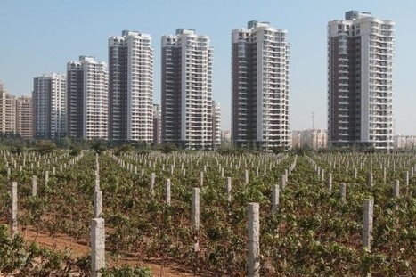 The Next Great Wine, Made in ... China? | Vitabella Wine Daily Gossip | Scoop.it
