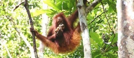 Palm Oil Free List | sustainable branding | Scoop.it
