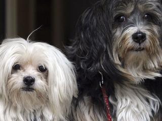 Pets improve mental health | Youth Mental Health | Scoop.it