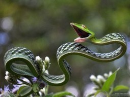 Picture of the Day: The Stunning Green Vine Snake | Digital-News on Scoop.it today | Scoop.it
