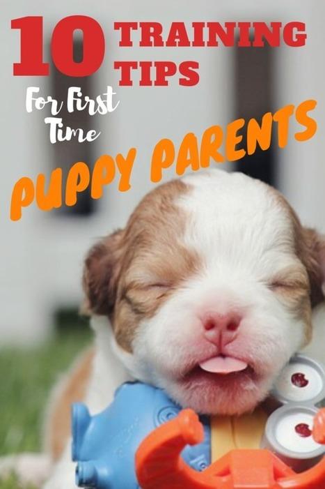 Новорожденные щенки игрушки