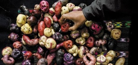 How the Potato Changed the World | News from the World | Scoop.it
