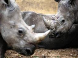 SANParks trio accused of poaching - Crime & Courts | IOL News | IOL.co.za | Kruger & African Wildlife | Scoop.it