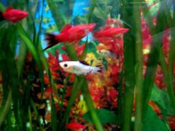 Fish Aquarium Tanks and Alzheimer's dementia - Alzheimers Support | Alzheimer's Support | Scoop.it