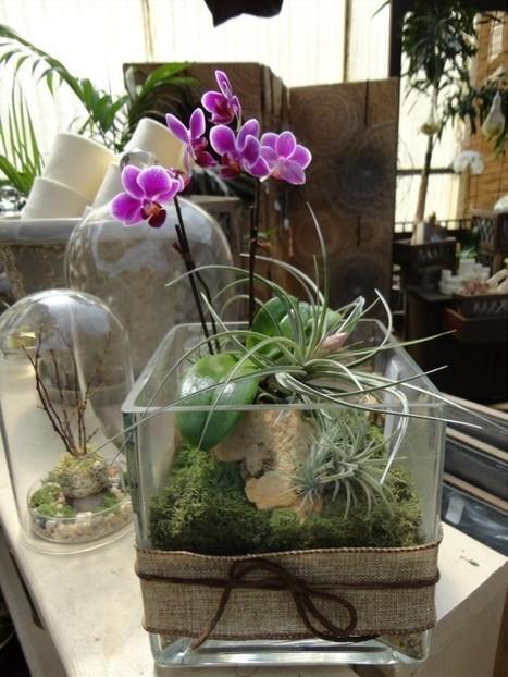 The Rainforest Garden: Container Garden Artisan Kris Blevons   Annie Haven   Haven Brand   Scoop.it