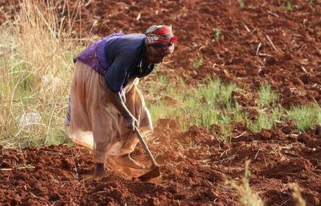 Morocco Launches Initiative for African Agriculture to Adapt to Climate Change | Morocco World News | CGIAR Climate in the News | Scoop.it