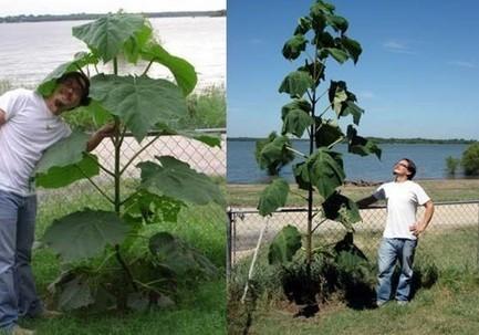 El árbol que puede salvar almundo   Ecología sostenible   Scoop.it