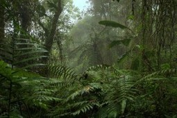 Protect Ecuador's Forests from Destructive Mining - ForceChange | ayubia national park | Scoop.it