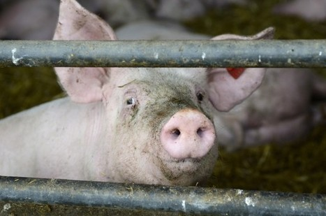 The Unintended Consequences Of North Carolina's 'Ag-Gag' Law | Ethics of eating | Scoop.it