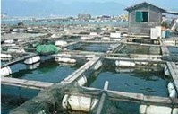 Aquaculture firms tap into China stock market recovery | Viet Linh | Scoop.it