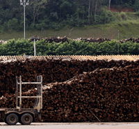 Wood costs for pulp mills and sawmills in Brazil have fallen the past year | Timberland Investment | Scoop.it