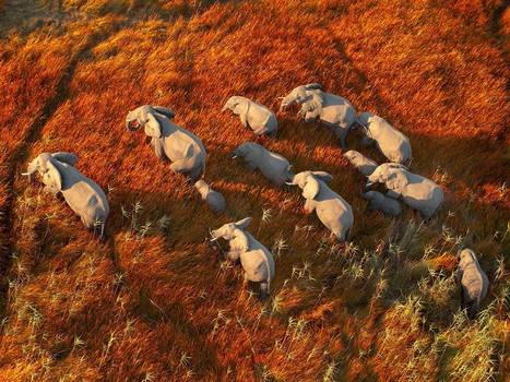 Poachers kill 300 elephants (and other animals) with cyanide in 'worst massacre in southern Africa for 25 years' | Biodiversity IS Life  – #Conservation #Ecosystems #Wildlife #Rivers #Forests #Environment | Scoop.it