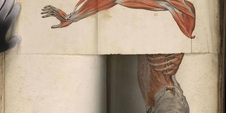 Anatomie: une série exceptionnelle de planches du XVIIe siècle | Optimisation, performances et émergence des nouvelles organisations | Scoop.it