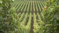Beaune : un débat sur la viticulture européenne est organisé mardi 12 novembre - France 3 Bourgogne   Le vin quotidien   Scoop.it