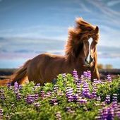 Spectacular Images of Horses by Tina Thuell | All about nature | Scoop.it