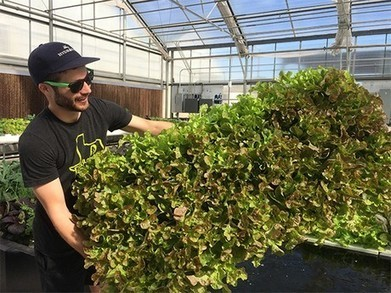 US(TX): Fertilizer trials at Hort Americas demo greenhouse | Vertical Farm - Food Factory | Scoop.it