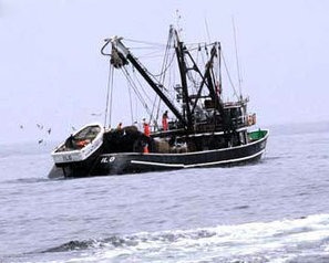 Government assures continuity of anchovy fisheries management - FIS | Fisheries & Fishing Technology | Scoop.it