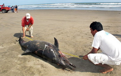 Expert Links Dolphin Deaths to Sonar Testing | Sustain Our Earth | Scoop.it