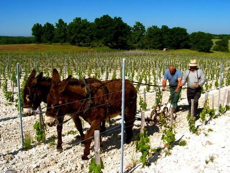 Cahors, renaissance d'une appellation | Gastronomy & Wines | Scoop.it