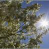 L'exposition solaire : Les UV naturels et artificiels
