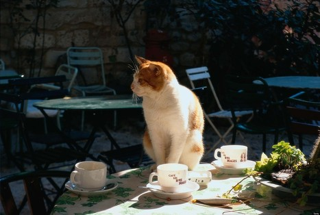 Cat Cafe Plan For Paris Sparks Upset Among Animal Rights Activists - Huffington Post | Coffee Lovers | Scoop.it