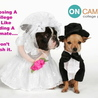 OnCampus College Planning LLC