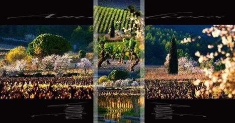 « Lueur des Corbières », Le plaisir des yeux et de l'esprit | Le Vin et + encore | Scoop.it