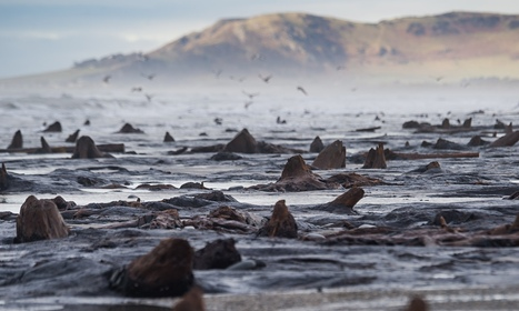 Prehistoric forest arises in Cardigan Bay after storms strip away sand - The Guardian   Ancient cities   Scoop.it