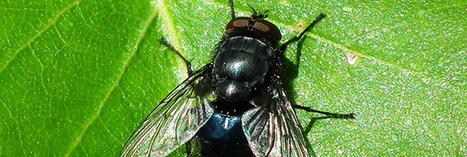 Chasser les mouches : 10 astuces naturelles | Articles divers | Scoop.it