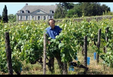 Maverick Of Biodynamic Wine Nicolas Joly Speaks | Vitabella Wine Daily Gossip | Scoop.it