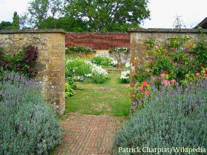 Edible Landscape Design: How Is Landscaping With Edible Plants Different?   edible landscaping   Scoop.it