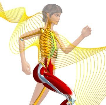 Nouveau site Anatomie 3D de Lyon 1 | Pralines | Scoop.it