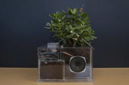 Artist Talk: Cyborg Plants with Michael Lucenkiw | DESARTSONNANTS - CRÉATION SONORE ET ENVIRONNEMENT - ENVIRONMENTAL SOUND ART - PAYSAGES ET ECOLOGIE SONORE | Scoop.it