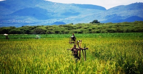 Peak Farmland: The End of Agricultural Expansion?   Landscapes for People, Food, and Nature Blog   Nature's Bounty   Scoop.it