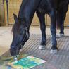 Horse482Riding