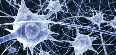 Modelling how the brain makes complex decisions | Social Neuroscience Advances | Scoop.it