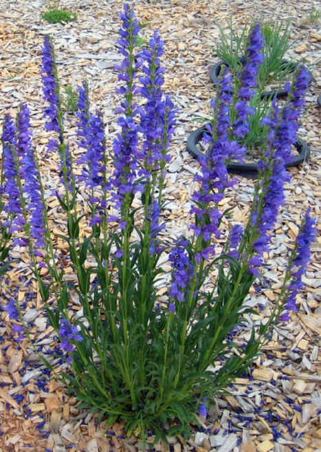 Bring on variety when landscaping with native plants | Water Conservation for Lawn and Landscape | Scoop.it