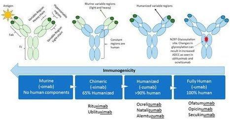 Biomedicines | Monoclonal Antibodies in M