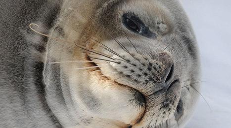 Antarctic Ocean Alliance | conservation & antipoaching | Scoop.it