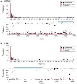 Genetic Adaptation Associated with Genome-Doubling in Autotetraploid Arabidopsis arenosa | Plant Genomics | Scoop.it