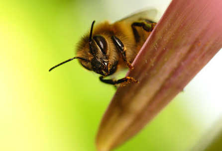 Futurity.org – High insecticide levels in dead honeybees | Colony Collapse Disorder | Scoop.it